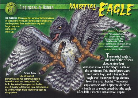 Martial Eagle front