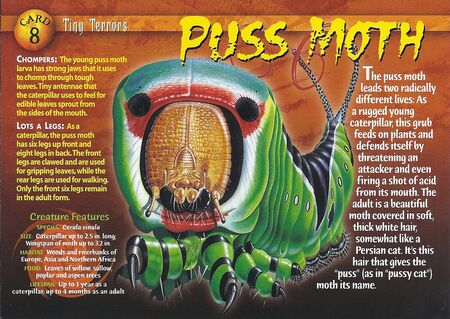 Puss Moth front