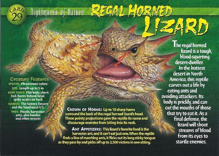 Regal Horned Lizard front