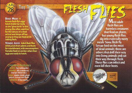 Flesh Flies front