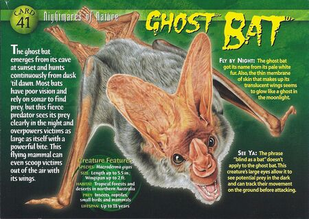 Ghost Bat front