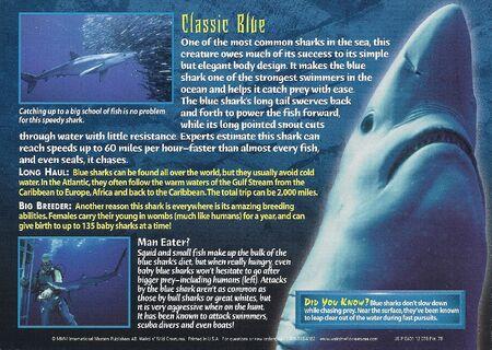 Blue Shark back