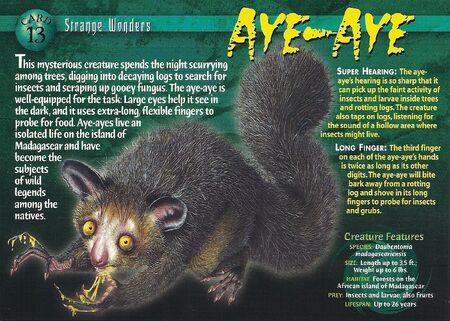 Aye-Aye front
