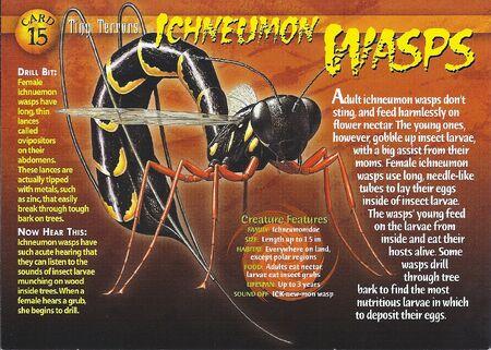 Ichneumon Wasp front