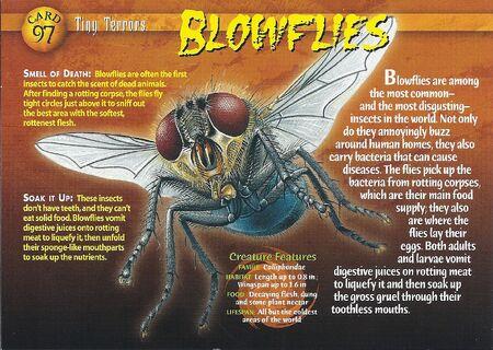 Blowflies front