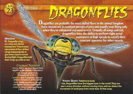 Dragonflies front