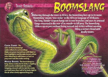 Boomslang front