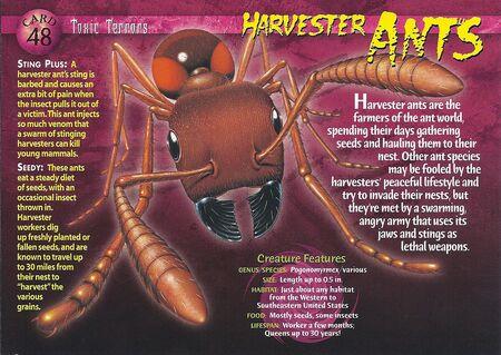 Harvester Ants front
