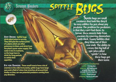 Spittle Bugs front