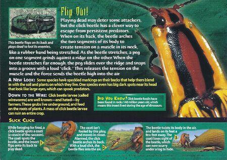 Click Beetles back