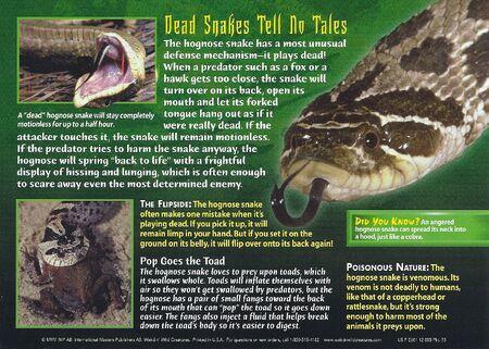 Hognose Snake back