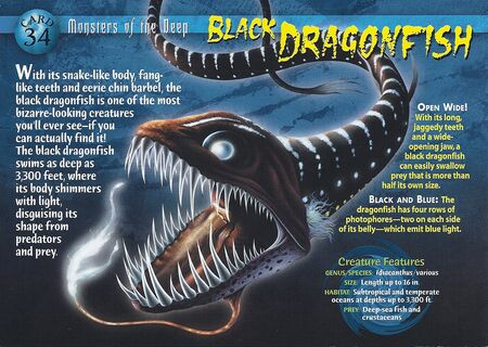 Black Dragonfish front
