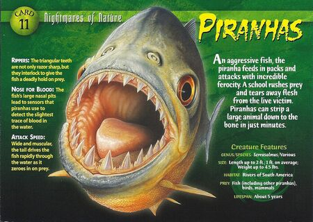 Piranhas front