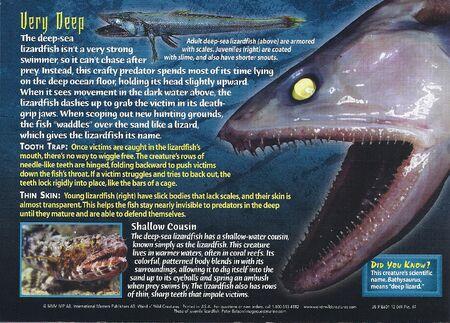 Deep-Sea Lizardfish back