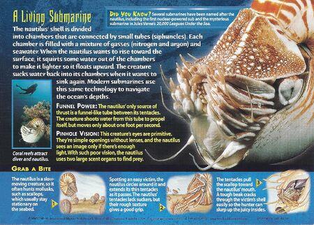 Chambered Nautilus back