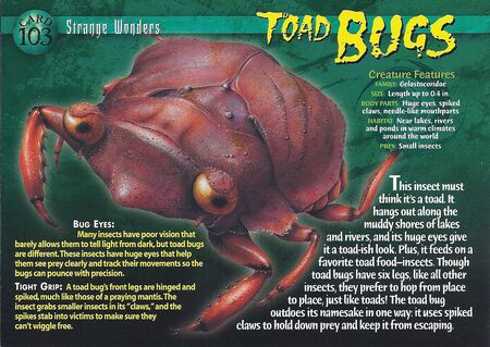 Toad Bugs front