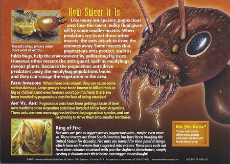 Pugnacious Ants back