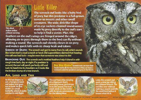 Screech Owl back