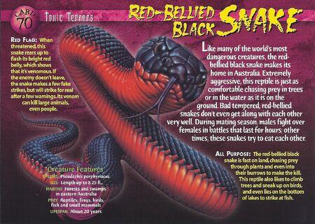 Red-Bellied Black Snake front