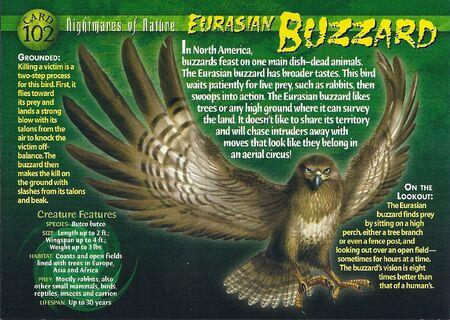Eurasian Buzzard front
