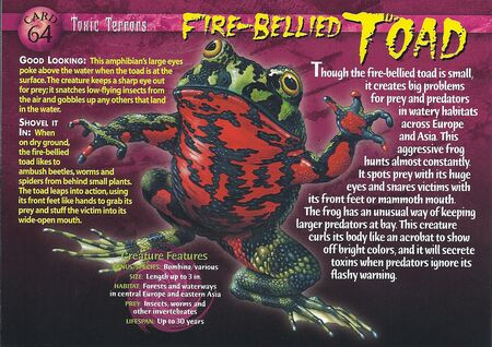 Fire-Bellied Toad front