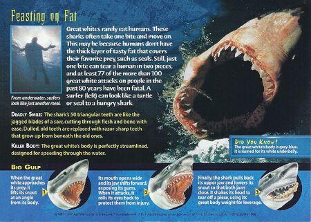 Great White Shark back