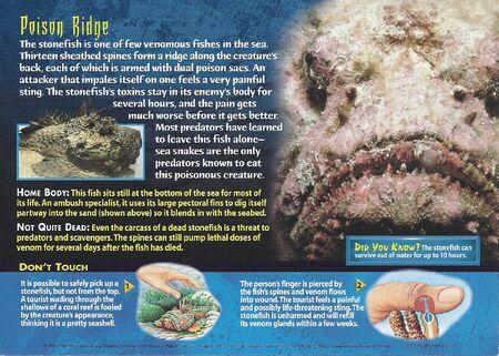 Stonefish back