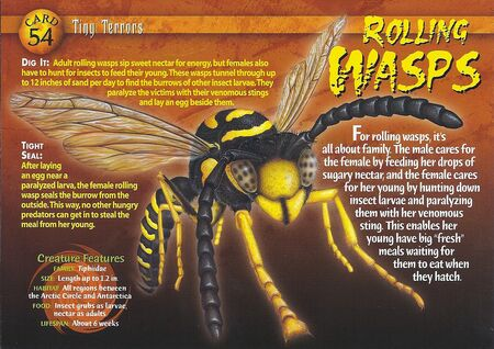 Rolling Wasps front