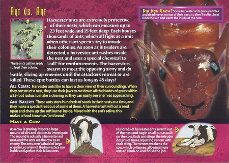 Harvester Ants back