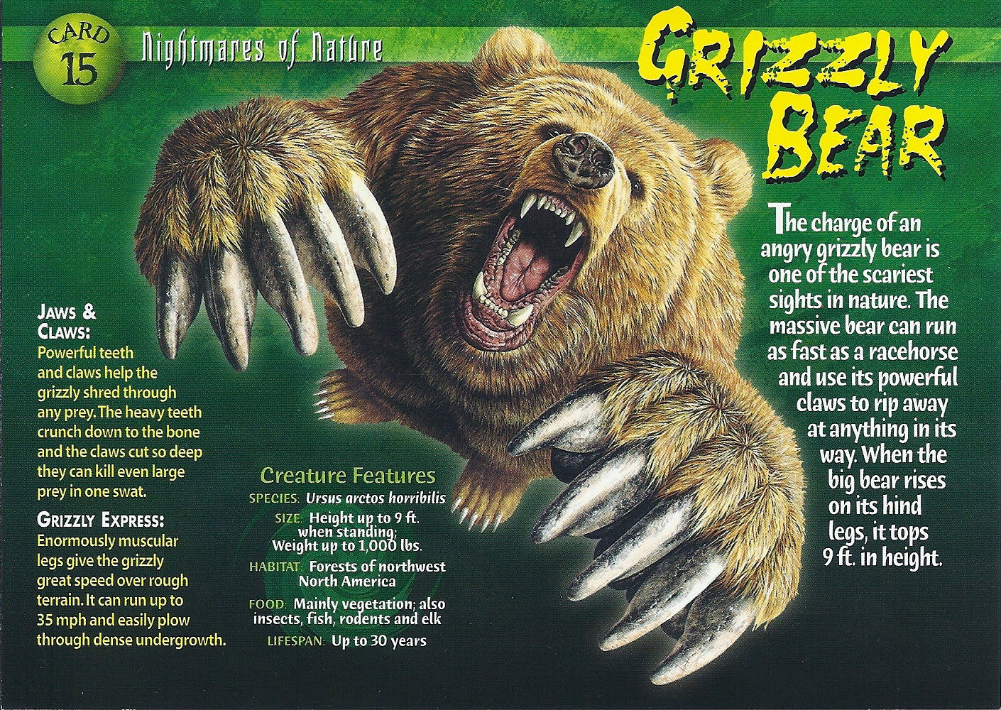 how to play grizzly bear game