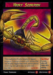 Hairy Scorpion