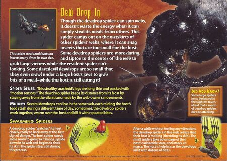 Dewdrop Spider back