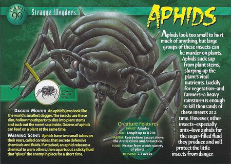 Aphids front
