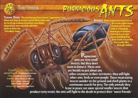 Pugnacious Ants front