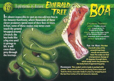 Emerald Tree Boa front