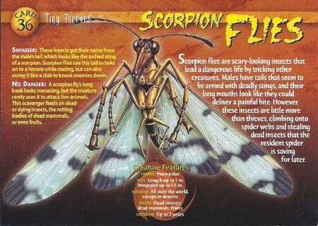 Scorpion Flies front