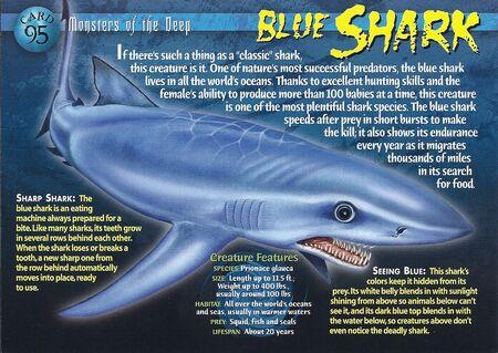 Blue Shark front
