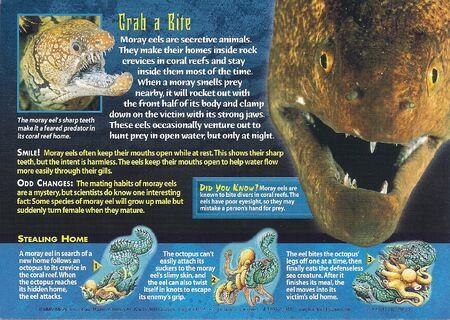 Moray Eel back