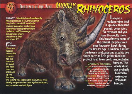 Wooly Rhinoceros front