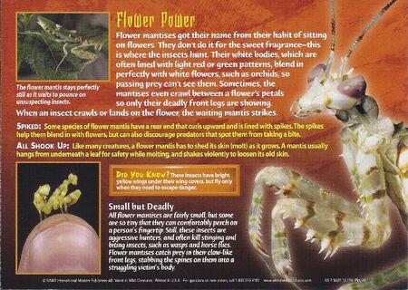 Flower Mantis back
