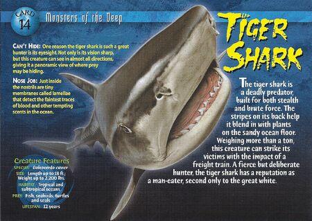 Tiger Shark front