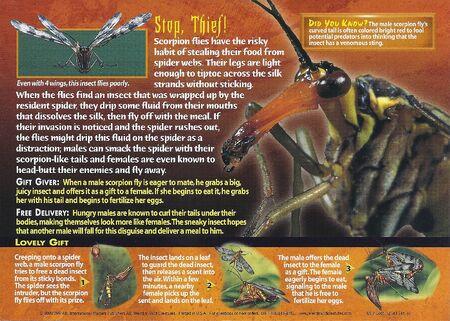 Scorpion Flies back
