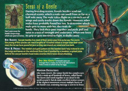Sawyer Beetle back