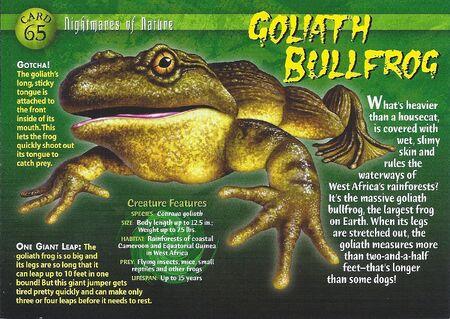 Goliath Bullfrog front