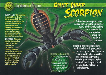 Giant Whip Scorpion front