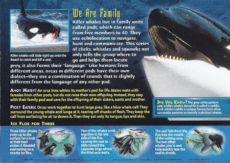 Killer Whale back