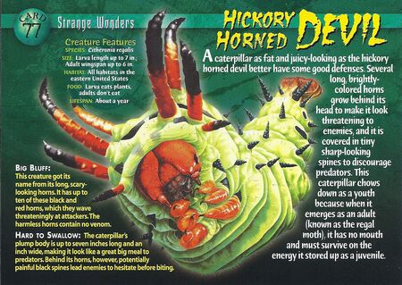 Hickory Horned Devil front