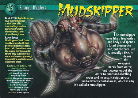 Mudskipper front
