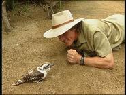 LearnMoreAbouttheAnimals-Kookaburra