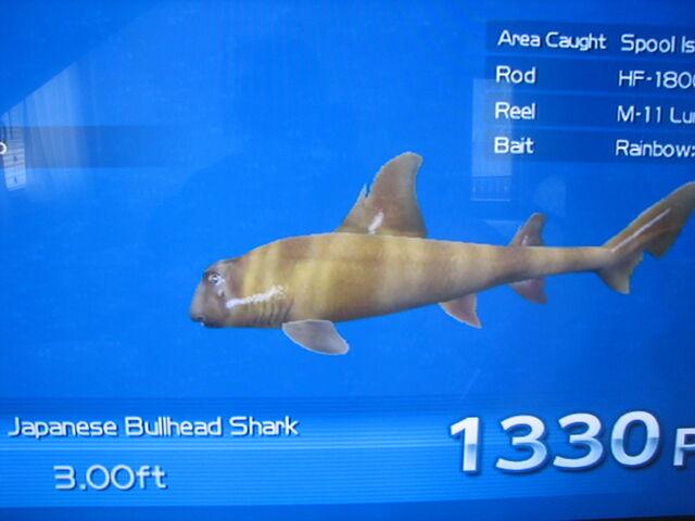 File:Japanese Bullhead Shark in the end of the day.jpg